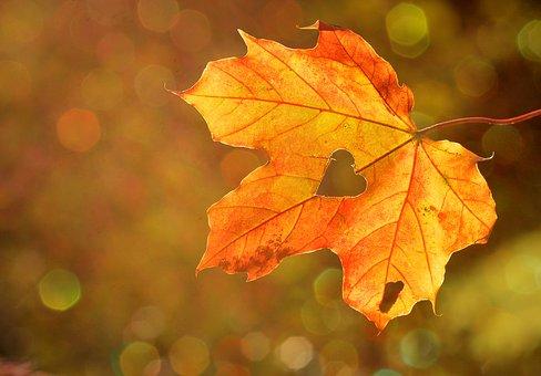 秋めいてきましたね♪