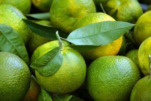 マグリットの柚子